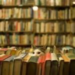 «ДУХОВНЫЙ КОНТЕНТ» ИЛИ ЖИЗНЬ ВО ХРИСТЕ? О рассудочной истине и опытном знании